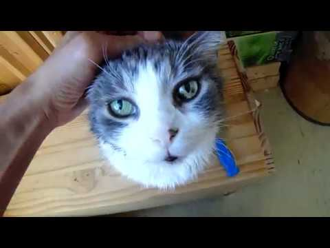 Coconut oil: how to remove coconut oil from your cat or dog after flea treatment
