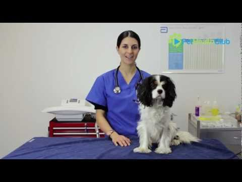 The pethealthclub - the importance of desexing your dog or cat