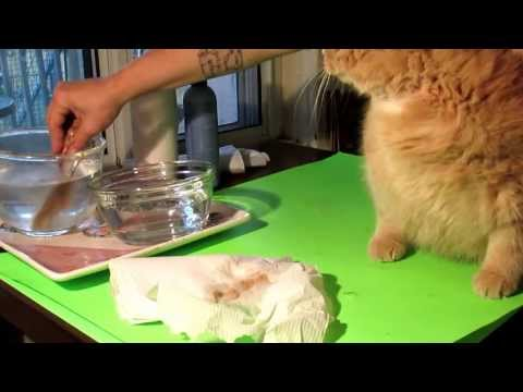 How to remove flea's/egg's from your cat safely and simple