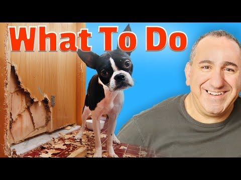 Dog separation anxiety video   my dog has anxiety when i leave