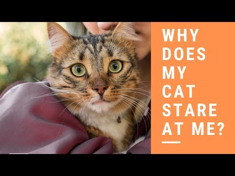 Why does my cat stare at me?