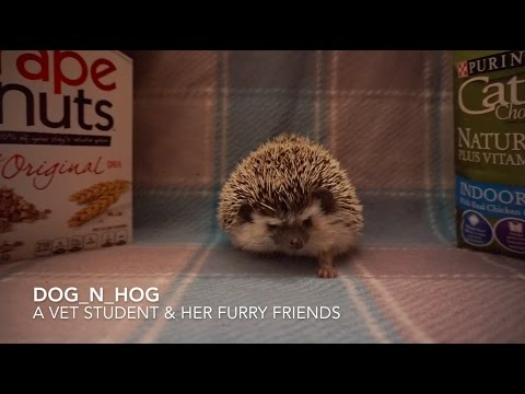Feeding hedgehogs - how to properly do so (part 1: dry food)