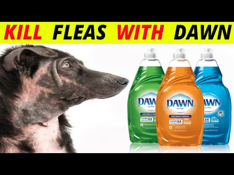 5 natural ways to kill fleas on dogs with dawn dish soap