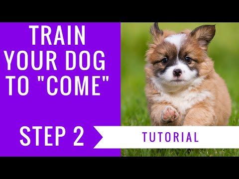 How to train your dog to come: step 2 tutorial
