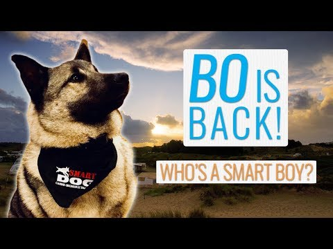 Rv travel vlog: our dog bo is back and he's smarter than ever!