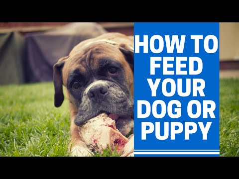 How to feed a dog or puppy correctly