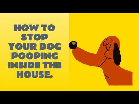 How to stop your dog pooping 💩💩 inside the house.🐶 | dog potty training videos.