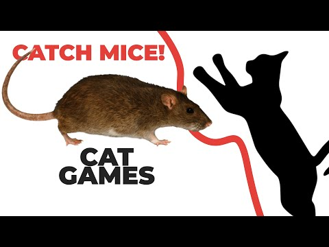 Cat games catching mice entertainment video for cats