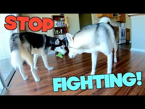 How to stop food aggression in dogs (end resource guarding forever!)