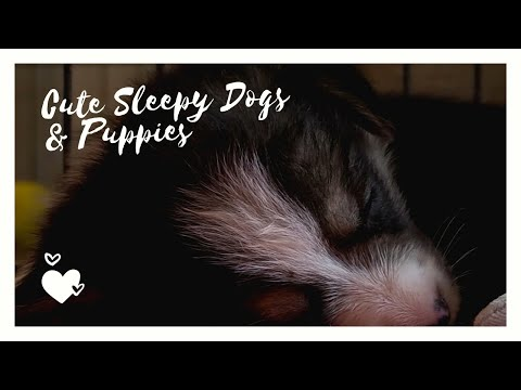 Cute sleepy dogs & puppies 💗 relaxing moments || cute & funny animals #5