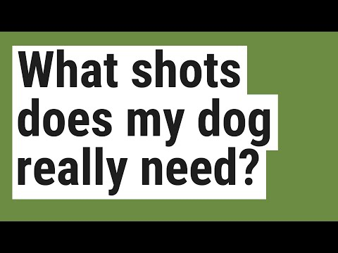What shots does my dog really need?