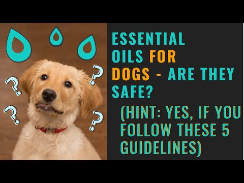 Essential oils safe for dogs? (5 guidelines - essential oil safety)
