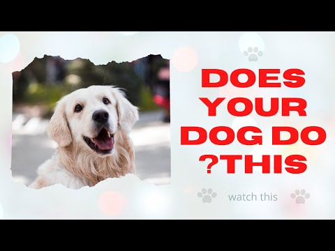 🆕does your dog do this? don't feed your dog this top video