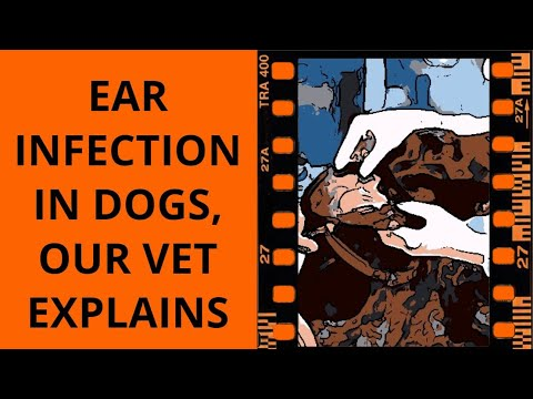 Dog ear infection and your other dog health questions #vet #earinfection #dog
