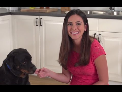 Top 6 foods you should not feed your dog - petco