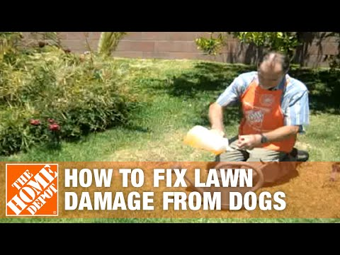 How to fix lawn damage from dogs   the home depot