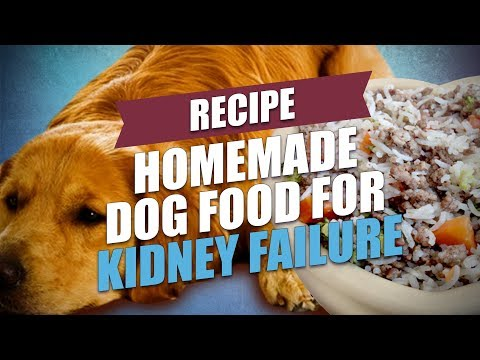 Homemade dog food for kidney failure recipe (healthy and cheap)