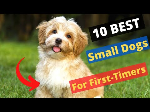 10 small dog breeds that are best for first-time owners 🐶😍