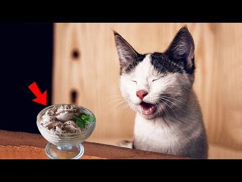 5 human foods that your cats can eat and it is completely safe