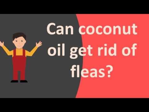 Can coconut oil get rid of fleas ?