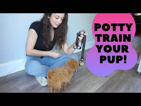 How to bell train your puppy to go potty outside!