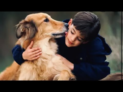 Don't hurt dog 🐶 they too have a feeling /short video