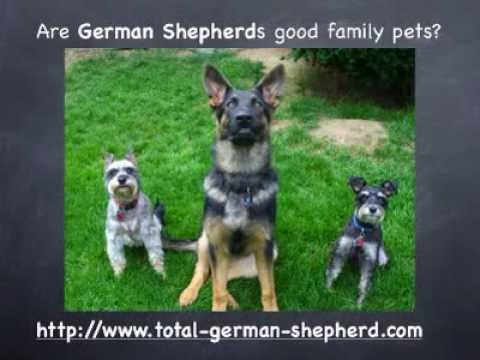 Are german shepherds good family pets?