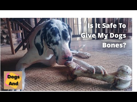 Is it safe to give my dog a bone?