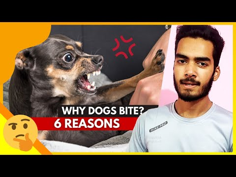 Why does my dog bite me so much (6 reasons) - hindi