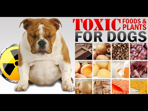 Toxic foods that can kill your dog | harmful foods for dog