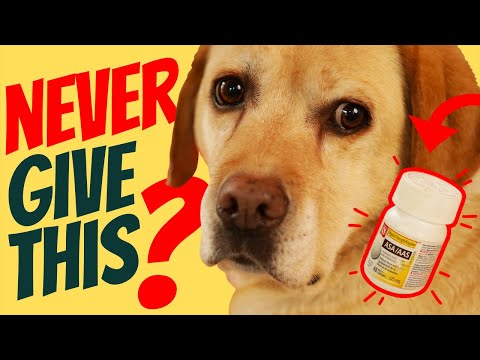 Aspirin for dogs: is it safe?