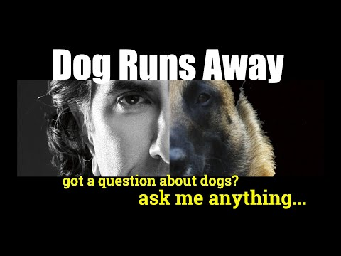 My boxer ran away, whats the best electric collar - ask me anything - dog training video