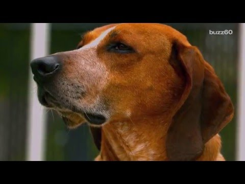 Artificial sweetener could kill your dog