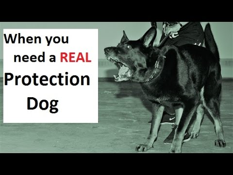 How to train a real protection dog (k9-1.com)