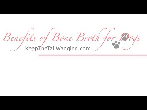 Benefits of bone broth for dogs - keep the tail wagging®