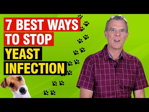 Itchy dog yeast infection (5 essential steps to stop it)