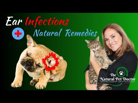 Natural remedies for dog and cat ear infections