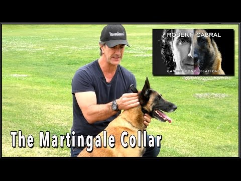 The martingale collar - dog training equiptment