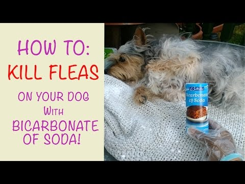 How to kill fleas on dogs using bicarbonate of soda!!!