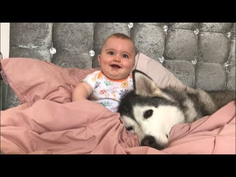 The most patient husky in the world around babies and children! [the hug is too much!]