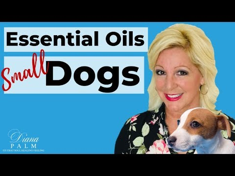 Essential oils safe for small dogs