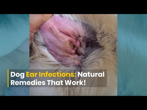 Dog ear infections: diy remedies that work