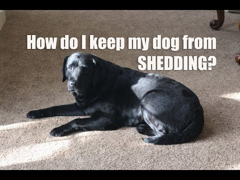 How can i prevent and reduce shedding?