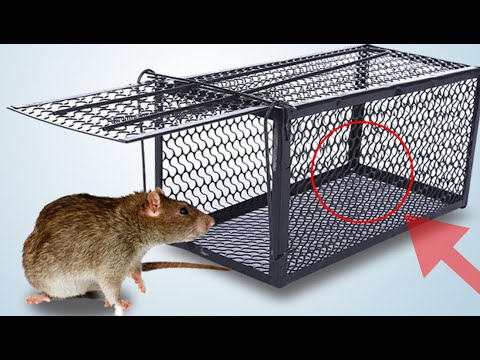 Tested & proven ways to get rid of rats permanently / how to kill rat / rat trap