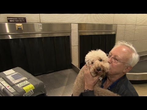 More airlines requiring larger pets to fly as cargo