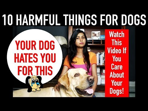 10 harmful things that hurt your dog   your dog hates you for this   pkp