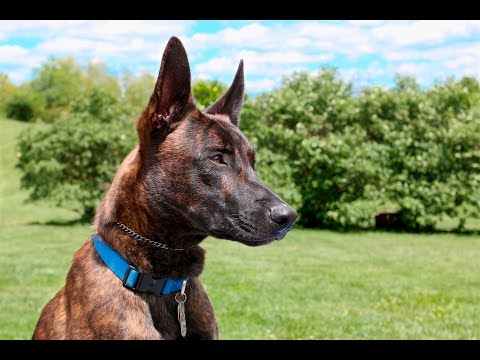 Formal dog training schools: what should you expect?