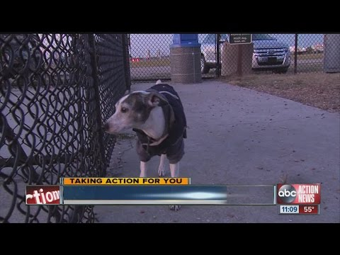 How to protect your pet from a dog attack