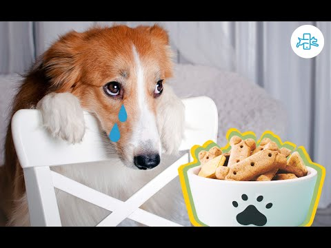 My dog doesn´t want to eat dog food - solution