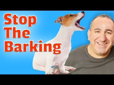How to stop my dog's barking permanently